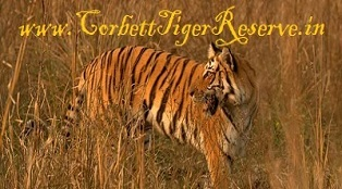 Corbett Safari